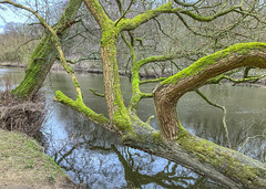 Photo of Fallen Tree, River Aire