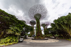 Beautiful Supertree Grove at Gardens by the Bay, Singapore