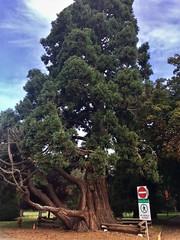 Beacon Hill, Victoria