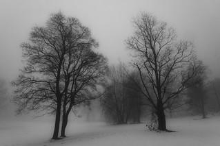Trees at Ekeberg