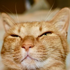 Feb. 22 is Cat Day in Japan as the date, 2-22, can sound like