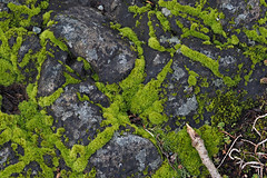 20210221 Oak Bay Co-op moss & lichen