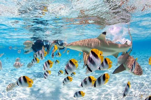 Koo - Bora Bora