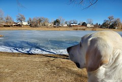 February 22, 2021 - A Thornton dog keeps watch. (LE Worley)
