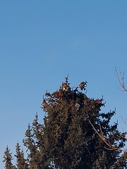 February 6, 2021 - A red tailed hawk in Thornton. (LE Worley)