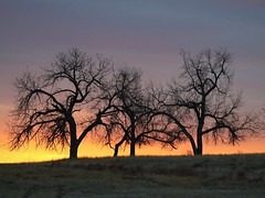 February 5, 2021 - A beautiful sunrise on the plains. (Bill Hutchinson)