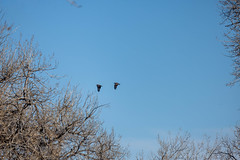 A-IMG_8204