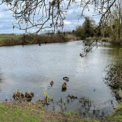Photo of Dorrington Duck Pond