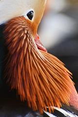 Photo of Mandarin