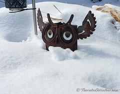 February 25, 2021 - Half a hoot of snow. (ThorntonWeather.com)