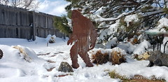 February 25, 2021 - Sasquatch in the sun after the storm. (ThorntonWeather.com)