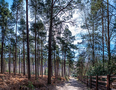 Photo of Bramshill Forest Walk, 23 Feb 2021 (6)-Pano
