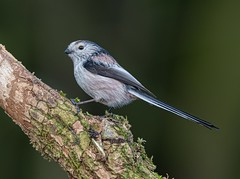 Photo of Time for another LTT