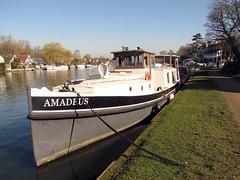 Photo of Amadeus - Photrocredit Neil King (1)