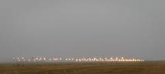 20210226_2969_7D2-70 Runway Lights (057/365)