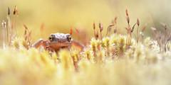 Photo of Palmate Newt