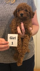 Lola Girl 1 2-26