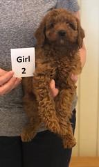 Lola Girl 2 pic 4 2-26