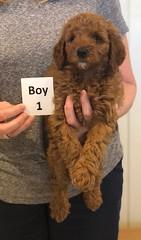 Lola Boy 1 pic 4 2-26