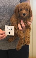 Lola Boy 4 pic 2 2-26