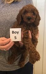 Lola Boy 5 pic 2 2-26