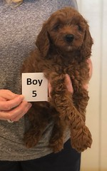 Lola Boy 5 pic 3 2-26