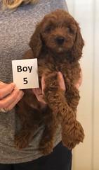 Lola Boy 5 pic 4 2-26