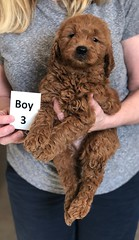 Ginger Boy 3 pic 4 2-26