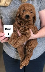 Ginger Boy 3 pic 2 2-26