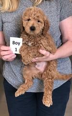 Ginger Boy 1 pic 3 2-26