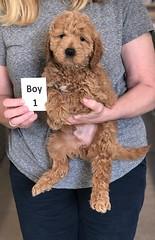 Ginger Boy 1 pic 4 2-26