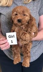 Ginger Girl 1 2-26