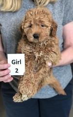 Ginger Girl 2 pic 2 2-26