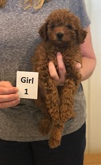 Lola Girl 1 pic 3 2-26