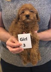 Lola Girl 3 pic 4 2-26