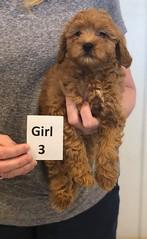 Lola Girl 3 2-26