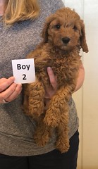 Lola Boy 2 pic 4 2-26