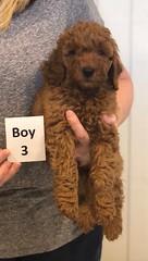 Lola Boy 3 pic 4 2-26