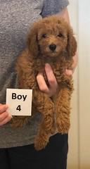 Lola Boy 4 pic 4 2-26
