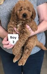 Ginger Boy 2 pic 2 2-26