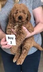 Ginger Boy 2 pic 3 2-26