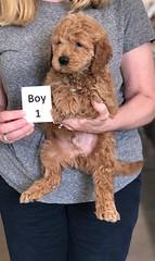 Ginger Boy 1 2-26