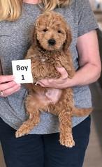 Ginger Boy 1 pic 2 2-26
