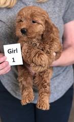 Ginger Girl 1 pic 3 2-26