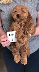 Ginger Girl 1 pic 2 2-26