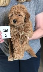 Ginger Girl 2 pic 4 2-26