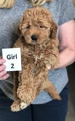 Ginger Girl 2 2-26