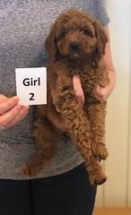 Lola Girl 2 2-26