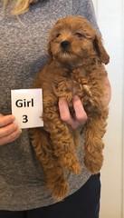 Lola Girl 3 pic 3 2-26