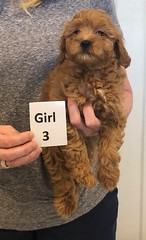 Lola Girl 3 pic 2 2-26